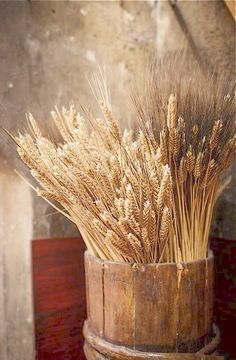 wheat and barley in wooden bucket - Country Living Color Splash, Idees Cate, Fields Of Gold, Wheat Fields, Farm Life, Belle Photo, Country Life, Country Living, Fall Decor