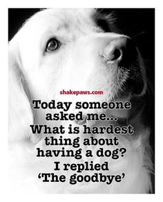 Funny Labrador Dog Quotes And Sayings – The Paws I Love Dogs, Puppy Love, Cute Dogs, Souvenir Animal, Pet Loss Grief, Pet Sitter, Pet Remembrance, Amor Animal, Schnauzers