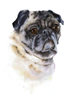 Pet portrait of a pug painted by watercolour artist Jane Davies Watercolor Moon, Watercolor Paintings, Watercolours, Portrait Embroidery, Pug Art, Cute Dogs And Puppies, Pug Love, Dog Portraits, Animal Paintings