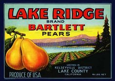 Lake Ridge Pears. #crateart