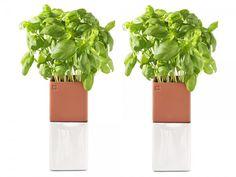 Herb Garden - self watering terracotta  pot sets (wicks moisture from pot below with a felt wick extending from pot bottom...love this!!