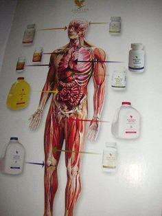 forever living products hebben een goede werking op ons lichaam!