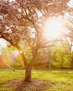 Etsy https://www.etsy.com/nl/listing/154895214/cherry-blossom-art-nature-photography