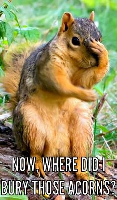 PetsLady& Pick: Funny Absent-Minded Squirrel Of The Day - Absent-Minded Squirrel I& in shock! Cute Funny Animals, Funny Animal Pictures, Beautiful Creatures, Animals Beautiful, Animals And Pets, Baby Animals, Small Animals, Animal Photography, Nature Photography