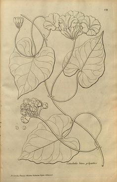 n211_w1150 by BioDivLibrary, via Flickr