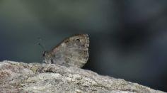 naturfoto online Moth, Insects, Animals, Nature, Animaux, Animal, Animales, Animais