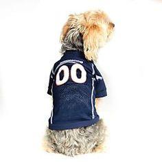10 Best Denver Broncos NFL Pet Gear @ Sugar Chic Couture images