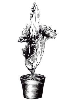 Botanicus by Nadia Fernandes, via Behance