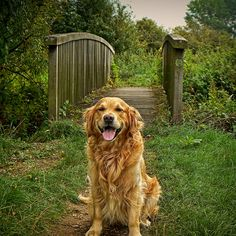 the smile of a golden :)