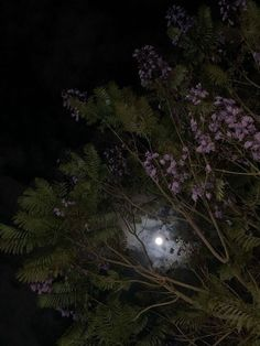 Night Aesthetic, Aesthetic Gif, Flower Aesthetic, Aesthetic Pictures, Leaves Wallpaper Iphone, Iphone Wallpaper Quotes Love, Netflix And Chill Tumblr, Moon Plant, Baby Girl Drawing