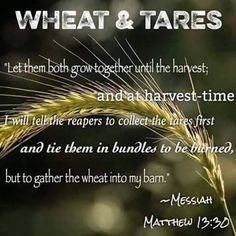The Reapers are Angels who REMOVE WICKED one's first ... THEN, God's ppl will be in the 2nd or GREATER EXODUS. (Rapture is ruled out) (AS Explained in Matt.13:24-43!!!)