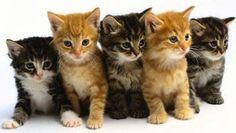 koty - Szukaj w Google