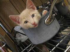 What you mean cat goo fo dinna?