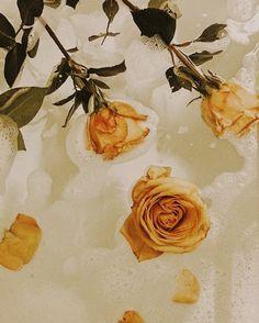 Ideas flowers photography wallpaper beauty roses for 2019 Orange Aesthetic, Beige Aesthetic, Flower Aesthetic, Aesthetic Vintage, Aesthetic Art, Aesthetic Body, Aesthetic Coffee, Aesthetic Pastel, Images Esthétiques