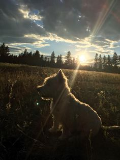 Brooks, in a July sunset ❤️ Invermere, BC, Canada