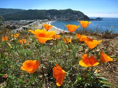 Image result for pacifica, Ca general plan picture