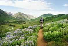 riding the Lupine Trail / from use real butter blog