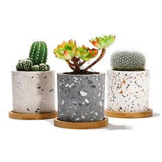 POTEY Succulent Plant Pots Terrazzo Planter - Cement Container Unglazed Concrete Cactus Cylinder Pot - Drain Hole with Bamboo Tray - Set of 3 Deep Grey Light Grey White Cement Pots, Ceramic Planters, Planter Pots, Planter Ideas, Small Plants, Cool Plants, Potted Plants, Terrazzo, Green Cactus
