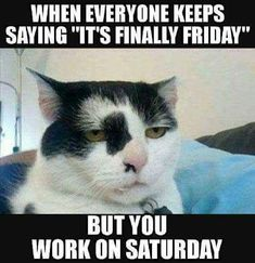 Find very good Jokes, Memes and Quotes on our site. Keep calm and have fun. Funny Pictures, Videos, Jokes & new flash games every day. Friday Jokes, Saturday Humor, Its Friday Quotes, Wednesday Humor, Friday Work Meme, Tgif Quotes, Friday Cat, Quick Quotes, Saturday Sunday