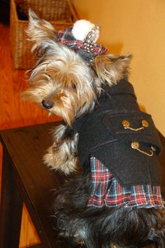 Oh yes, I design Doggy Kilts and Tammy's no matter how Big or Teenie, right my little Olive? She's a Super model Dog Dresses, Nice Dresses, Plaid Dog Collars, Dog Costumes, Westies, Petunias, Scottie, St Patricks Day, My Design