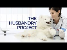 The Husbandry Project - How To Train Veterinary Care, Training Plan, Learning To Be, Dog Owners, Stress, Puppies, How To Plan, Pets, Projects