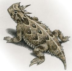 The Horny Toad -I used to keep these as pets. Rub their belly and it would put them to sleep!