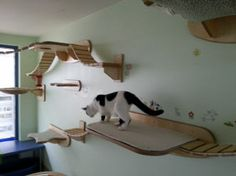 The deck plate is made ​​in a rectangular shape with rounded corners. The lateral attachment points (AP) are intended to accommodate wall-hanging bridges. These allow your cat to climb and descend to another level. For your cat is the deck plate covered with a high-quality shaggy carpet. This is equipped with snaps and can be abgeknüpft for cleaning easy. If necessary, he may at any time be exchanged for a new one. The shaggy rug is for cozy comfort on the deck plate provided.