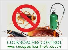We offer exclusive #pest #control #services at #Chandigarh, Panchkula and Mohali. Get #Cockroaches Removal Treatment in your house. Call us on :- +91-9041008868 and Visit for more info :- www.indopestcontrol.co.in