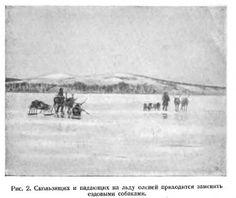 Ездовое собаководство - Северные ездовые собаки. Аляскинский маламут, Сибирский хаски , Самоед. Уход, содержание, кормление, спорт. Щенки, продажа щенков