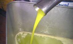 oil, harvest october