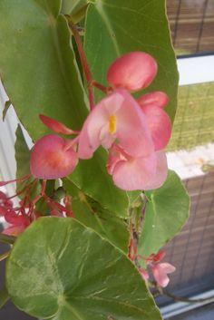 bella planta , pero ni idea como se llama . alguien sabe?