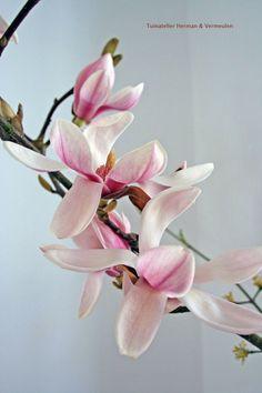 Magnoliatakken in een vaas #voorjaar #sakura #japan