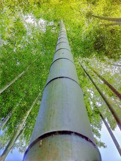 Japanese bamboo forest. I would love to do this for wall and ceiling. Have the trunk going up one wall and ceiling a canopy of bamboo!