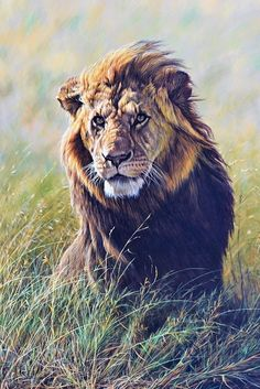 Latest Original Wildlife Paintings for Sale New Exclusive Original Animal Paintings by Alan M Hunt, Join Alan's Mailing list to be notified of his newest wildlife artwork for sale. Wildlife Day, British Wildlife, Lion Wall Art, Lion Art, Big Cats Art, Cat Art, Wildlife Paintings, Animal Paintings, Sand Cat