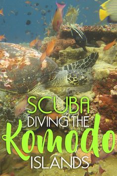 Komodo definitely ranks among the best spots in Indonesia to dive. You can pretty much dive off any beach in the area and find gorgeous coral and an impressive array of underwater life. Want to experience the amazing underwater world of Indonesia? Here's everything you need to know about diving Komodo National Park!