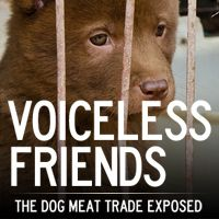 The cruel dog meat trade exposed | Animal Equality Undercover Investigation
