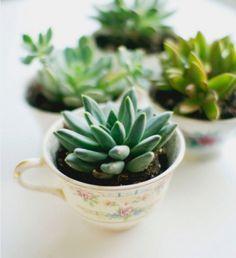 comment planter cactus