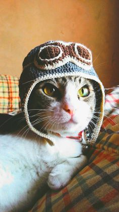 """Pinned and/or Repinned Especially For {{YOU}} by Your Newest PinPals,  """"JacquiandScott"""" on Pinterest. We Follow Followers, and We Worship Cats, (Dogs too, of course,) We Collect Everything, and Search Far and Wide 4Pics that Comprise our Collection of over 500 Boards, and 100,000. Pins, Gifs, and Videos. Tag your friends who need to see this.  Come See The Idiosyncrasy 👉 and Please Follow us! 👉 @JacquiandScott and @JacquisCloset on Instagram, and the Previous Pinner Said... Aviator Costume Chat, Pet Costumes, Pet Sweaters, Animal Sweater, Photo Chat, Crochet Animals, Crochet Pet, Animal Hats, Cat Hat"""