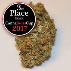 Canna Swiss Cup・Gewinner Hunderte von Jury-Mitgliedern haben gewählt und die Sieger erkoren. Wir sind auf dem 2. Platz (Glashaus) und 3. Platz (Indoor) gelandet. #cannaswisscup2017 #cannaswisscup #cannabiscup #switzerland #growing #cbd #cannabis #thebotanicals #Kiosk #purenaturalraw #Cannabisnews #MedicalCannabis #Pro7 #cbdgoldoil #Hanf #Weed #Forschung #Prävention #Medizin #THC #Marijuananews #Tabakersatz #SwissCannabis #Artur #Cannabidiol #Pot #Medizinischescannabis #ArturCBD #ArturWeed Kiosk, Cannabis, Herbs, Pure Products, Glass House, Hemp, Research, Medicine, Ganja