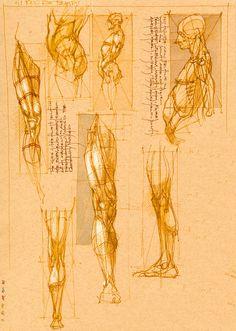 Book of Bones Photo: Leg Studies . Leg Anatomy, Anatomy Study, Anatomy Art, Anatomy Sketches, Anatomy Drawing, Art Drawings Sketches, Figure Drawing Reference, Anatomy Reference, Art Reference Poses