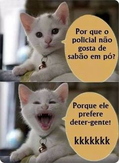 Gato do Face Gato Do Face, Funny Jokes, Funny Cats, Stress, Try Not To Laugh, Laugh Out Loud, Puns, Laughter, Have Fun