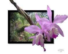 Orchideen im Urwald