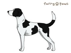 Furry Paws // NCT Kip's Truth of the Legend [Lla 3STM 8HH 2hh 1.353] 3.1 *BoB*'s Kennel