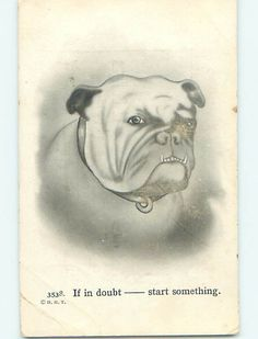 Pre-Linen BULLDOG DOG WANTS TO START SOMETHING - PROBABLY A FIGHT. Pinned by Judi Crowe.