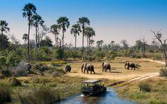 Rush hour in the Okavango Delta...