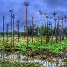 #finland #suomi #instafinland #travel #trip #art #instart #nature #instanature #sky #grass #tree #clouds #wtf #strangeness #puddle #oddity #финляндия #путешествие #нечто