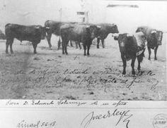 Sobre la fotografía, escrito a mano, se lee el siguiente texto: Corrida de Miura lidiada en Linares el 28 de agosto de 1947. El toro Islero está al frente y es el que hirió de muerte a Manolete.  Para D. Eduardo Sotomayor de su afmo.  [Firma ilegible]  Linares 5-6-48
