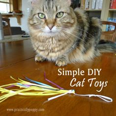 DIY Cat Toys - takes 10 minutes and you can use recycled supplies! From Taelor to uncle Jamie Diy Cat Toys, Pet Toys, I Love Cats, Crazy Cats, Diy Upcycling, Cat Enclosure, Cat Room, Animal Projects, Cat Crafts