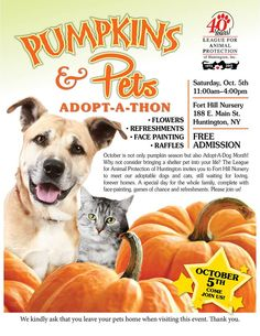 Pumpkin patch pets adoption