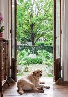 Southern Homes: Inside Beautiful Botherum Photo Credit: Caroline Allison. Southern Homes, Southern Charm, Southern Living, Southern Style, Simply Southern, Modern Country, Country Life, Mans Best Friend, Pet Birds